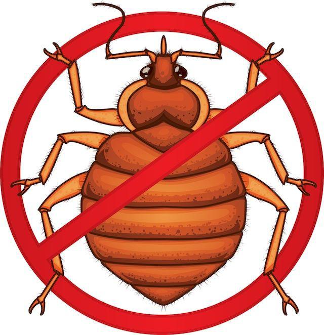 bugs-kill