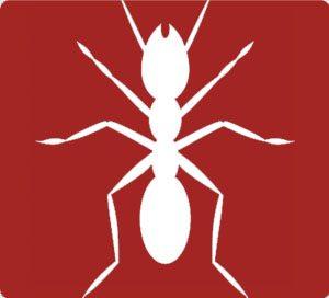 carpenter-ants